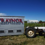 Taynor Vineyards 03